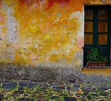 Old window with a plant in Colonia del Sacramento, Uruguay by Atanas Bozhikov