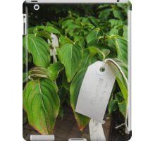 the wish tree iPad Case/Skin