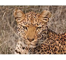 Leopard in your face Photographic Print