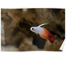 FireFish Poster