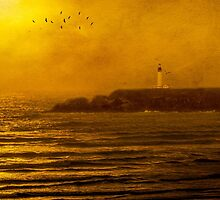 Yaquina Head Lighthouse by Diane Schuster