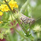 Good Morning Grasshopper!! by rasnidreamer