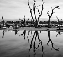 Swamp in Mandurah by Dejezza