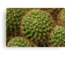Points of view - cactus Canvas Print