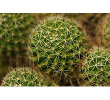 Points of view - cactus Photographic Print