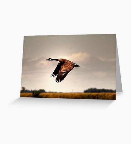 Goose in Flight Greeting Card