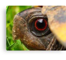 Box Turtle Macro  Canvas Print