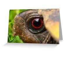 Box Turtle Macro  Greeting Card