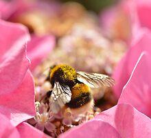 Bumblebee by Kasia Nowak