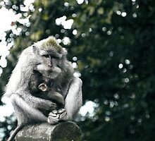 In Arms - A sign of love and affection by Komang