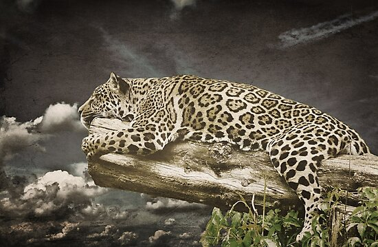 Lazing on a Sunday Afternoon by Denise Abé