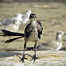 Grackle by venny