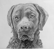 Ranger's Portrait at Two by Phyllis Dixon