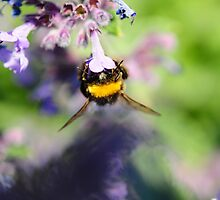 Hang Thyme by duncandragon