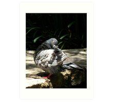 Sleeping Pigeon Art Print