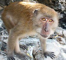 Monkey Island, Koh Phi Phi, Thailand by SBJC