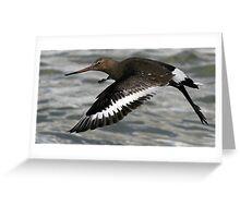 Flight Of The Godwit Greeting Card