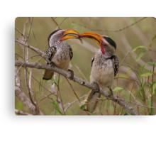 Hornbill Love Canvas Print
