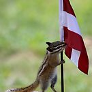 The Chipmunk Intern For Austria by Betsy  Seeton