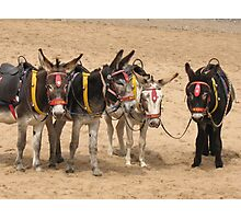 British Beach Donkey's Photographic Print
