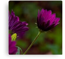 Purple bokeh  Canvas Print