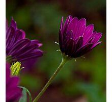 Purple bokeh  Photographic Print