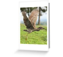 Learning to fly Greeting Card