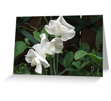 Fresh and Pure - Raindrops on Sweet Peas Greeting Card