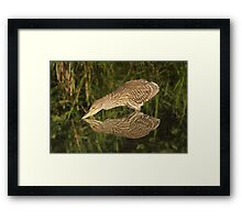 Mirror mirror on the wall who is the fairest heron of all? Framed Print
