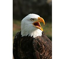 Male Bald Eagle Chirping Photographic Print