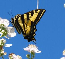 Swallowtail Butterfly by THurdCreations