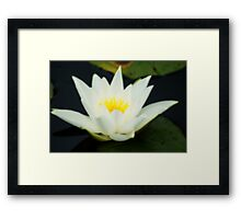 Lily of Enlightenment And Love ~ The Orton Effect ~ Framed Print