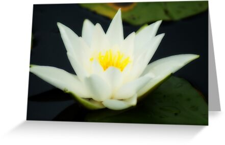 Lily of Enlightenment And Love ~ The Orton Effect ~ by Sandra Cockayne