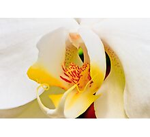 White/Yellow Orchid Photographic Print