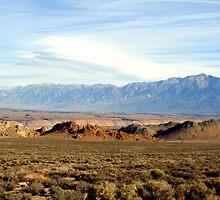 """""""High Desert Beauty"""" by Lynn Bawden"""