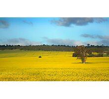 Australian Canola Landscape Photographic Print