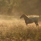 horse in the mist by neoellis