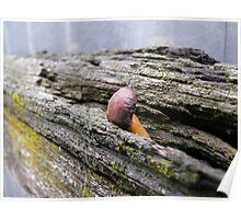 the discreet fungi Poster