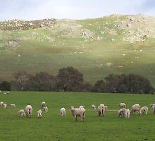Lambing Ewes by Cathy McAdie