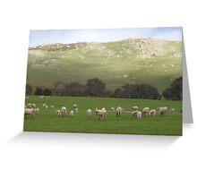 Lambing Ewes Greeting Card