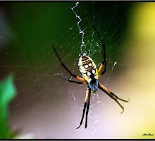 Garden Spider by Mattie Bryant