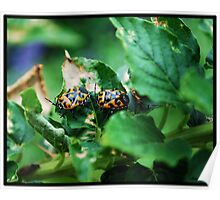 Orange & Black Beetles Poster