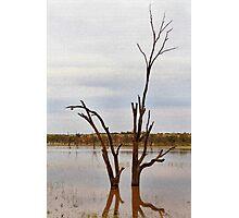 Dead Tree Digitised Photographic Print