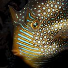Fish Faces. by James Peake Nature Photography.