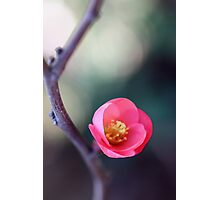 Just One Flower Photographic Print