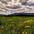AN ADIRONDACK MEADOW  by MIKESANDY