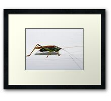 Cricket Framed Print