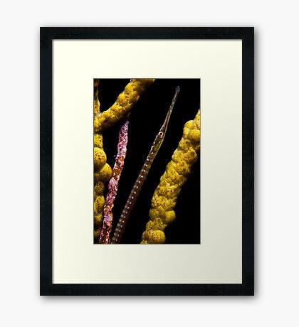 Peeking Pipefish Framed Print