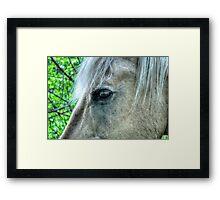 Eye of the Pegasus Framed Print