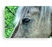 Eye of the Pegasus Canvas Print